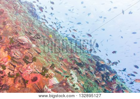 Fish With Coral Reef Underwater Life