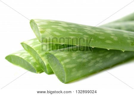 Aloe vera leaves, Family Xanthorrhoeaceae, Central of Thailand