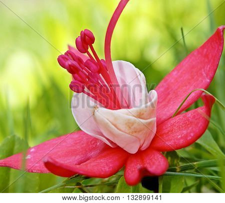 A pink fuchsia laid on grass in a natural setting