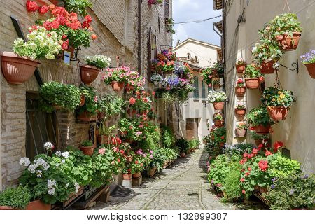 Side street with flowers in the town of Spello in Umbria Italy