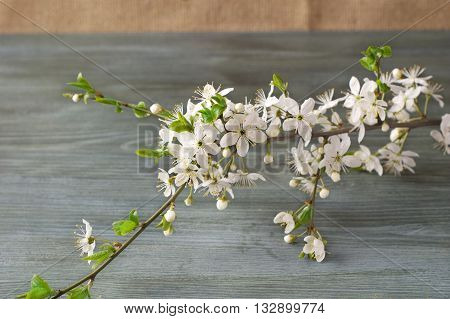Flowering branch on paper texture. Japanese style of wabi sabi. Wedding invitation.
