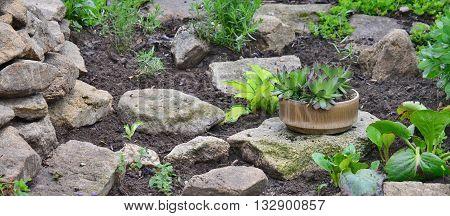 newly established garden rockery South Bohemia Czech Republic