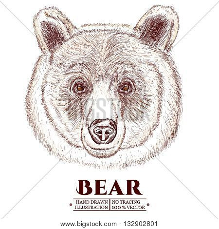 Portrait of a bear head of a brown bear hand drawn vector illustration