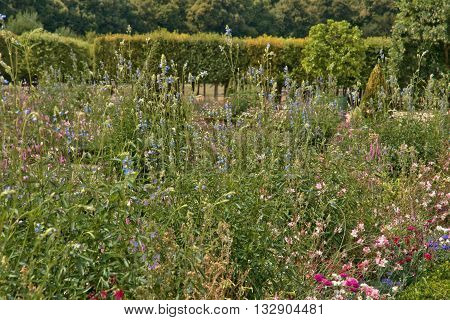 Versailles France - august 19 2015 : the Marie Antoinette estate in the parc of Versailles Palace. garden of Grand Trianon