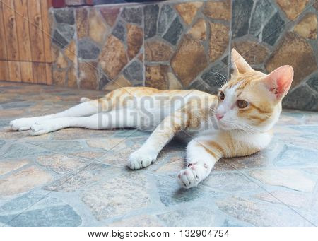 Cat looking ,cat resting in the street on day time, lazy cat, funny cat, street cat