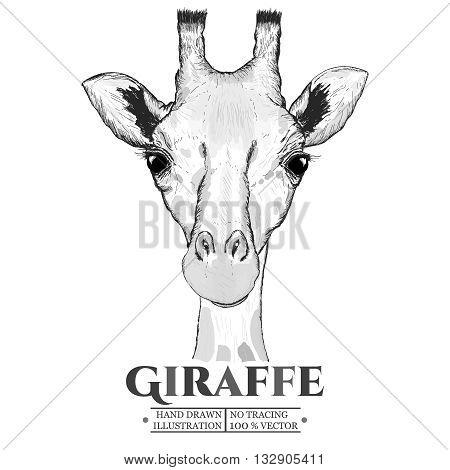 Giraffe realistic portrait sketch vector isolated on white