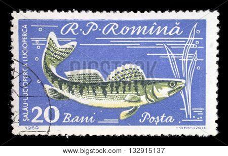 ZAGREB, CROATIA - JULY 18: stamp printed by Romania, show fish, Pikeperch, circa 1960, on July 18, 2012, Zagreb, Croatia