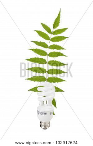 light bulb and fern isolated on white background