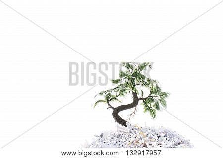 plant in shredded papers isolated on white background
