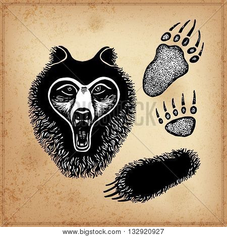 Set of hand drawing ink black and white bear face, paw, footprint of an animal, Vector illustration. Line art. Isolated.