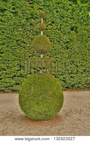 Versailles France - august 19 2015 : topiary art in the castle park