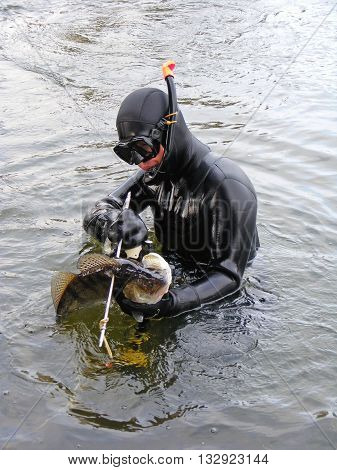 Man in wetsuit with speargun holding fish Sander at winter day