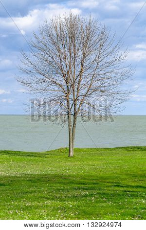 Lonely tree in Background of the green grass on the coast and blue sky