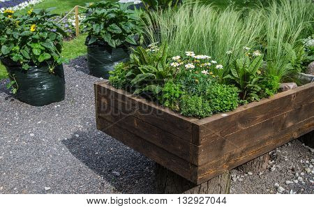 A variety of plants and vegetables grown in a wooden box close up