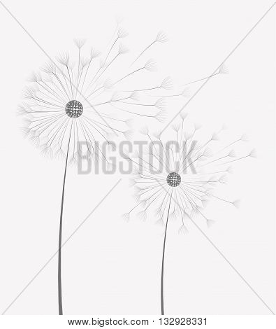 Vector illustration of dandelion flower in motion