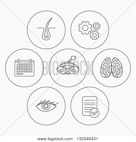 Eye, neurology brain and surgical lamp icons. Trichology linear sign. Check file, calendar and cogwheel icons. Vector