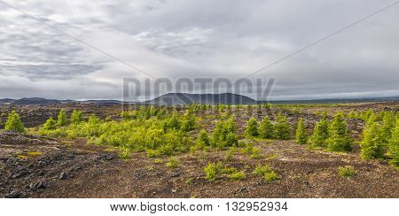Icelandic Colorful Landscape On Iceland, Summer Time
