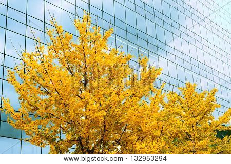 Ofice tower with yellow tree in autumn time