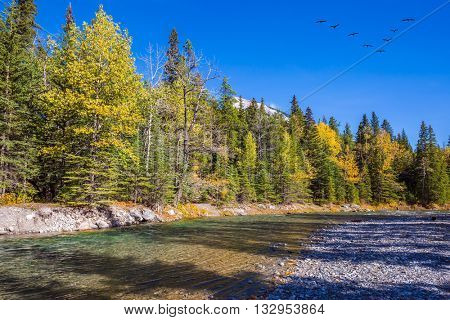 Flock of migratory birds in the blue sky. Mountain valley in Banff National Park. Canada, Rocky Mountains