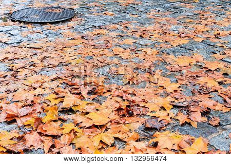 Dry autumn leaves on wet cobblestone street with manhole cover