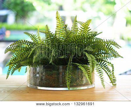 Green fern leaves in the vase, nature background