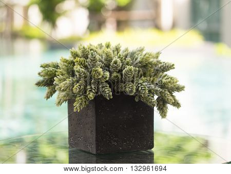 Green leaves in the vase, nature background