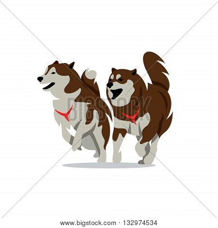 Siberian sled dogs Isolated on a White Background