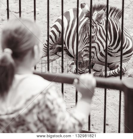 Girl near a cage with zebra in zoo in black white
