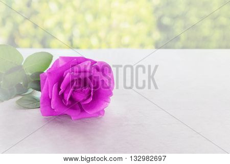 Single Violet Purple Rose In Soft Mood On Classic Table And Natural Tree Bokeh Green Background, Rom