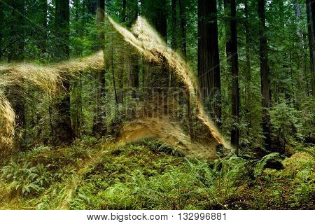 double exposure of coyote and green forest