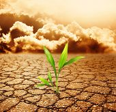 stock photo of smog  - Green plant growing trough dead soil - JPG