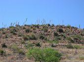 image of xeriscape  - sotol desert hillside - JPG