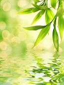 Bamboo leaves reflected in rendered water