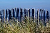 foto of driftwood fence  - beach fence in low light with beach grass and sea in background - JPG