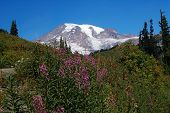picture of top-less  - volcano mountain rainier with less snow than usual on top - JPG