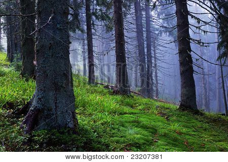 Coniferous Wood