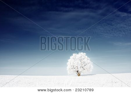 Alone frozen tree in snowy field and deep blue sky