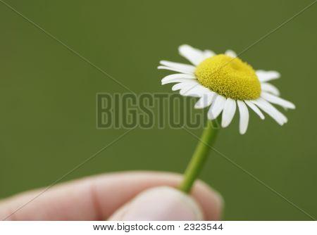 Flower In Fingers1