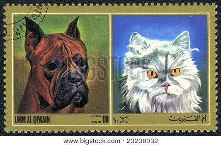 Cat And  Boxer Dog