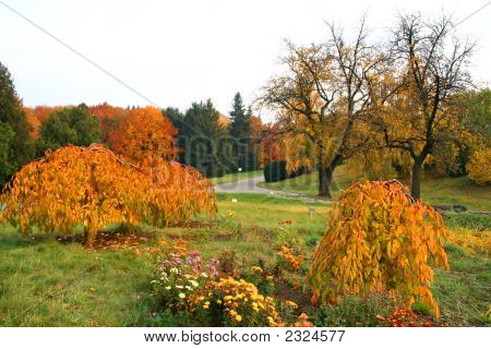 Vivid Autumn. Fall Colors