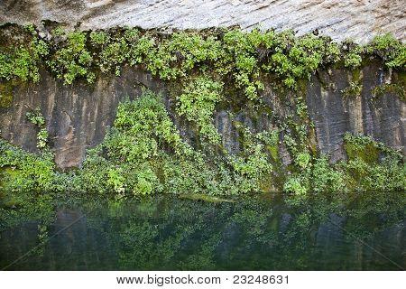 Vegetation covered canyon wall