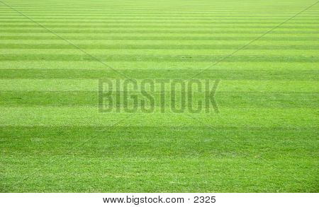 Campo de verde