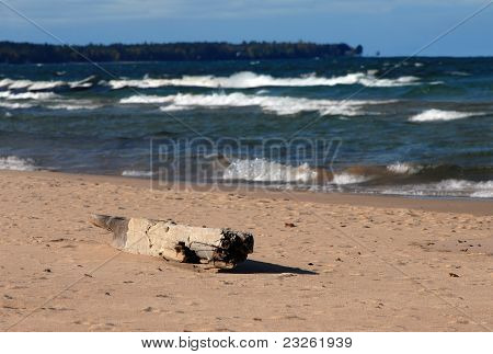 Driftwood On Lake Superior
