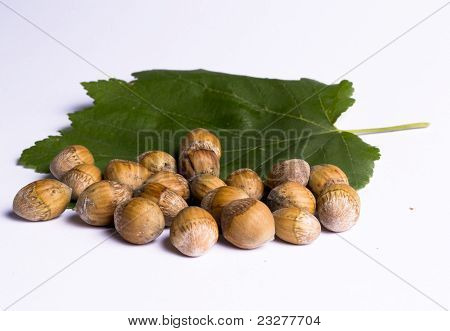 Hazel Nuts With Leaves
