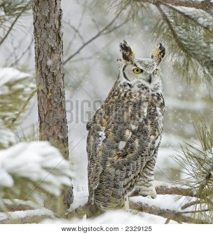 Vogel lange Eared Owl In Schneefall