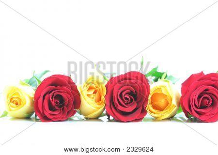 Three Red And Three Yellow Roses Border