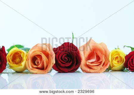 Border Of Roses Lined Up In Middle Of Frame