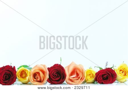 Border Of Roses Lined Up At Bottom Of Frame
