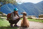 Girl Traveller Interact With Lama Animal On Sunny Day Light In Peru Machu Picchu poster