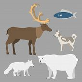 Alaska State Symbols Flat Style Vector America Travel Animal National Geographic Outdoor Wildlife No poster